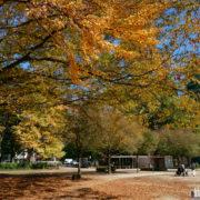 日ごとに秋色深まる錦町公園