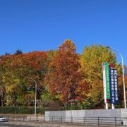 雲一つない秋空に映える紅葉