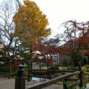 天賞酒造の庭の紅葉
