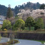 桜が満開の仙台城址